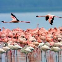 viaje de incentivo a Kenia