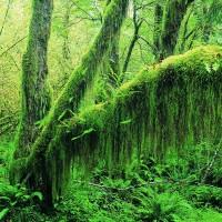 Viaje de incentivo a entornos