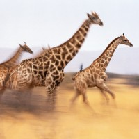 Viaje de incentivos safaris